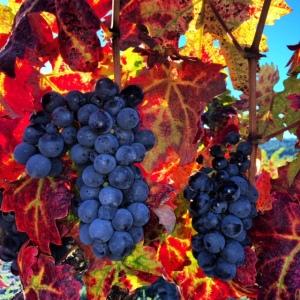 Harvest Color by Tim Carl