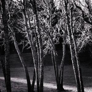 Light before rain by Tim Carl