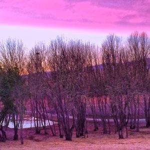 Purple Rise by Tim Carl